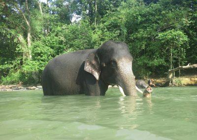 KECV Elephant
